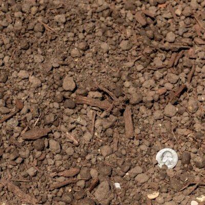 Mushroom Compost with Quarter